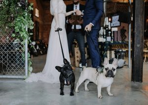Smoked Garage Brisbane Dog Friendly Wedding Venue