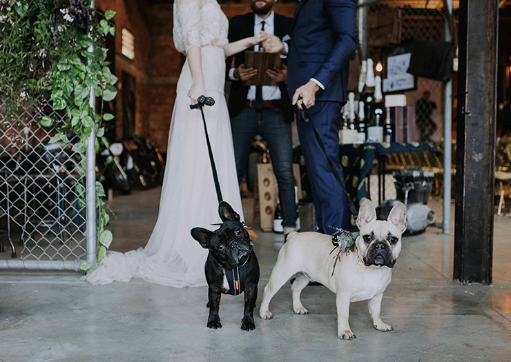 Smoked Garage Brisbane Dog Friendly Wedding Venue